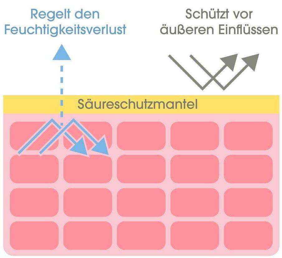 Schematische Zeichnung der Haut mit dem Säureschutzmantel