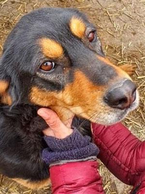 Der Kopf eines Hundes wird von den Händen eines Menschen gehalten. Der Hund ist schwarz mit braunen Flecken.