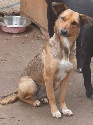 Ein brauner sitzender Hund schaut skeptisch nach links.