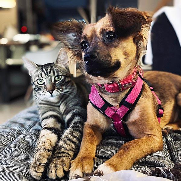 Eine Tigerkatze und ein brauner Hund liegen glücklich auf einer grauen Decke in ihrem neuen Zuhause. Die Katze schaut direkt in die Kamera, der Hund verträumt nach links