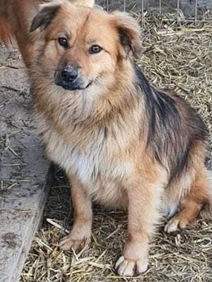 Brauner Hund sitzt auf einem Boden belegt mit Stroh.