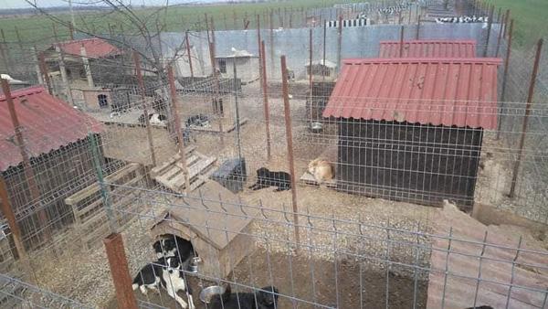 Ein Shelter (= Zufluchtsort) in Rumänien, in welchem die geretteten Hunde untergebracht werden. Es sind große Hundehütten sowie mehrere Hunde und Gehege zu sehen.