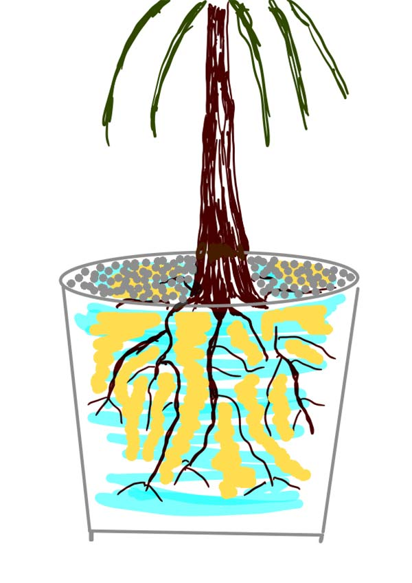 Zeichnung einer Pflanze in einem Blumentopf. Mit Wasser gegossen, gedüngt und mit einer Kieselschicht gemulcht.