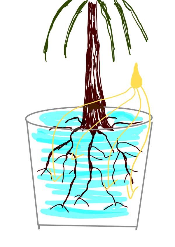 Zeichnung einer Pflanze in einem Blumentopf. Mit Wasser gegossen und gedüngt.
