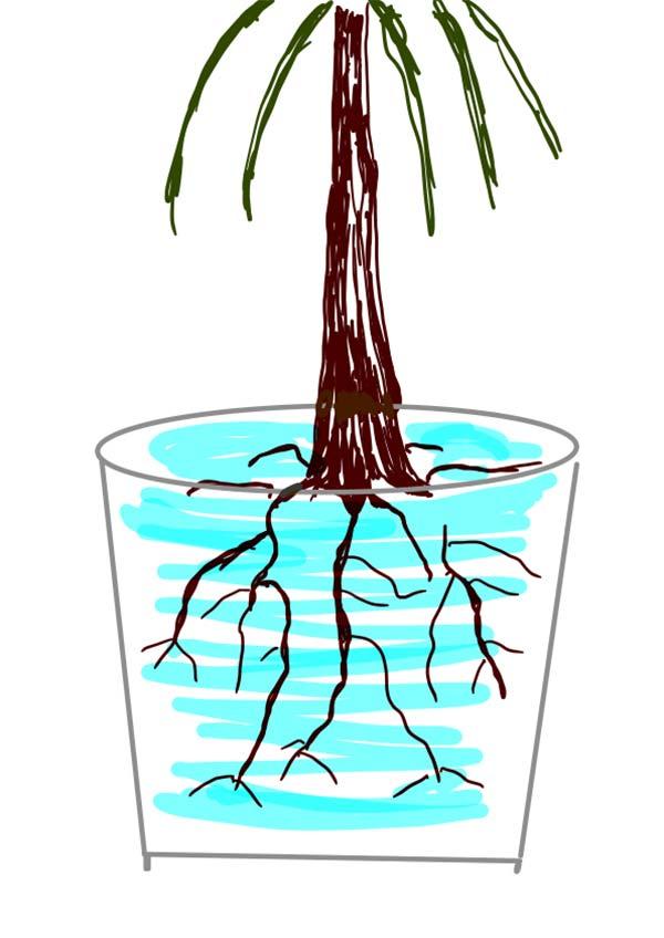 Zeichnung einer Pflanze in einem Blumentopf wurde mit Wasser gegossen.