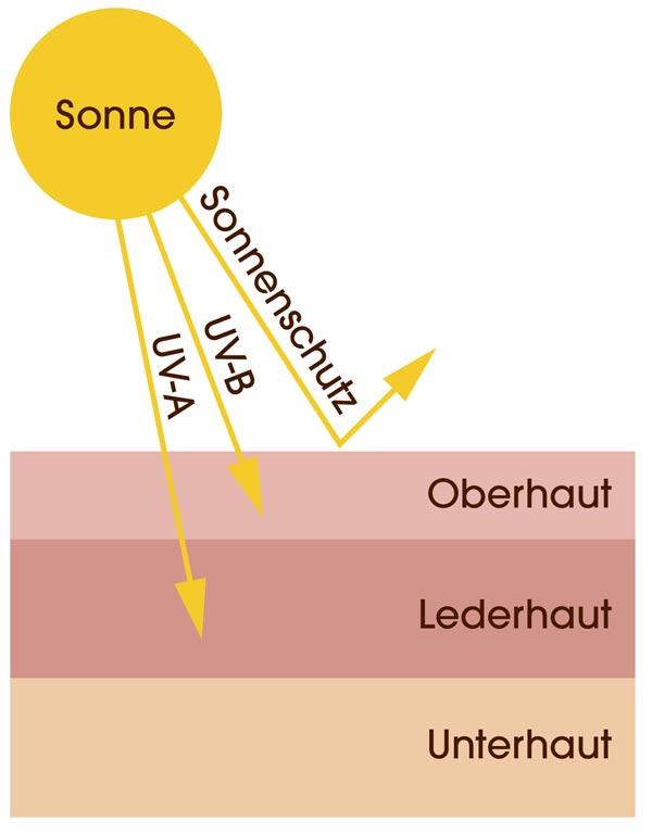 Zeichnung, wie die UV-Strahlung der Sonne auf die Haut wirkt. UV-A dringt tief in die Lederhaut, UV-B dringt in die Oberhaut. Mit Sonnenschutz prallt die Strahlung an der Hautoberfläche ab
